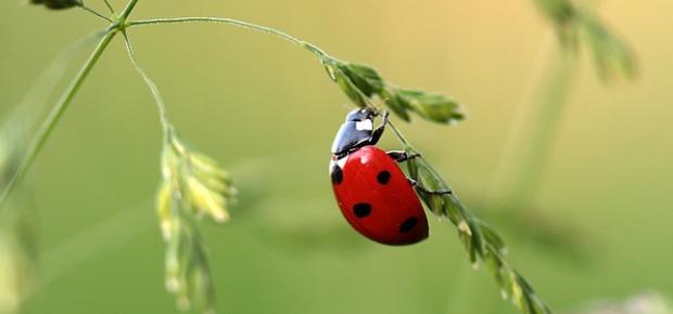 Zoologia | Phylum Arthropoda