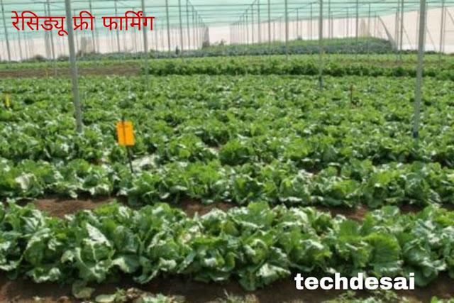 गांव में रहकर आप भी कर सकते है मोटी कमाई इस तरह की खेती का बिजनेस।