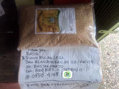 Benih pesanan BASIR Brebes, Jateng   (Sebelum Packing)