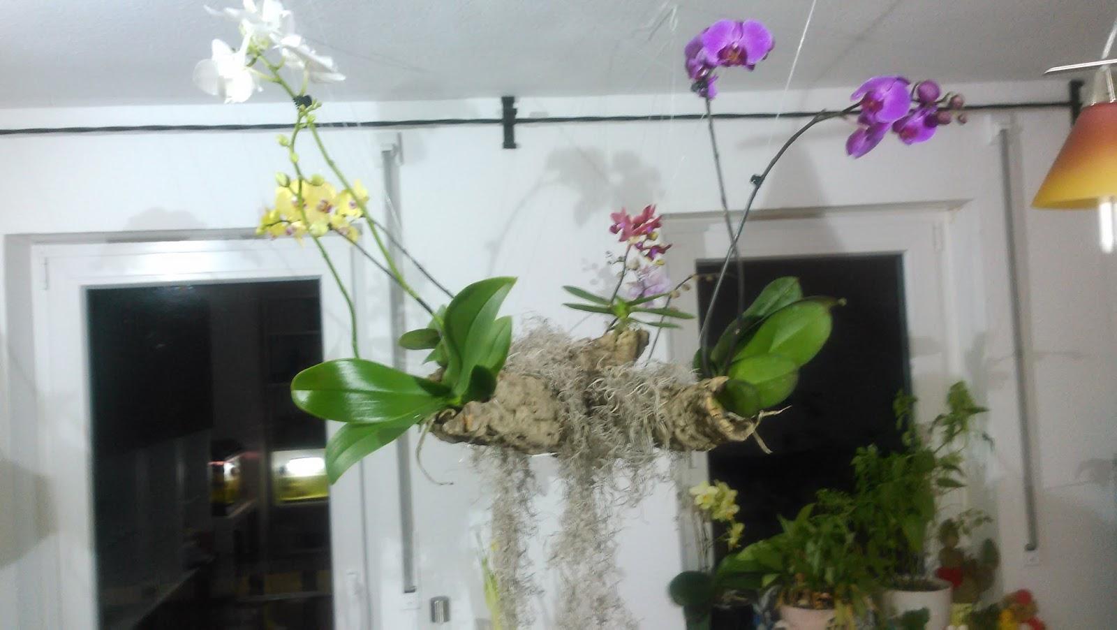 tomaten mark 39 s gartenblog der schwebende orchideenbaum exotische sch nheit f r das wohnzimmer. Black Bedroom Furniture Sets. Home Design Ideas