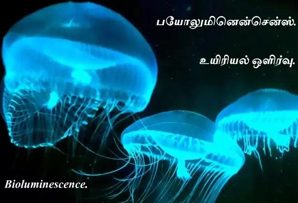 உயிரினங்களின் ஒளியாற்றல் - Bioluminescence.