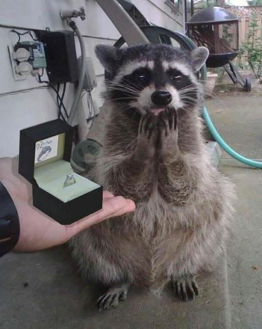 Want to marry me? Hahaha Funny