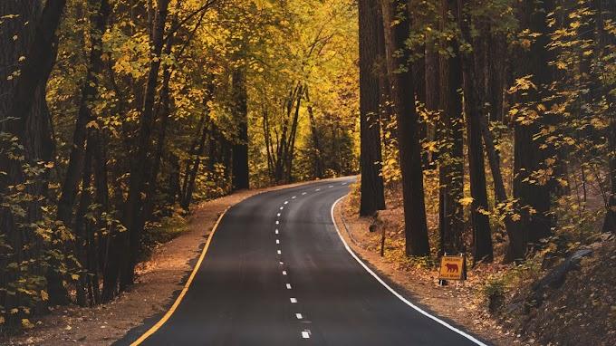 Estrada com Árvores do Lado para Plano de Fundo