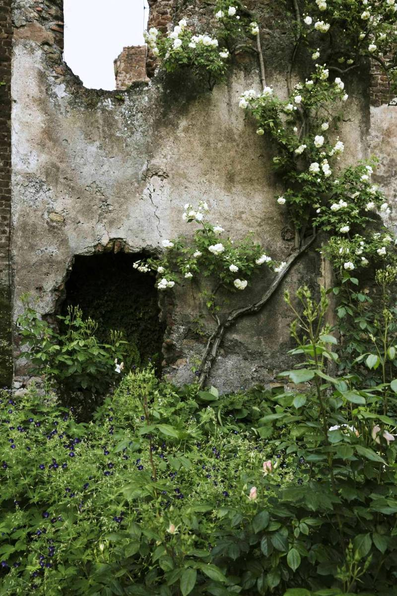 Muro con rosas en Torrecchia Vecchia