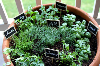 How to Grow Herbs at Home Easily