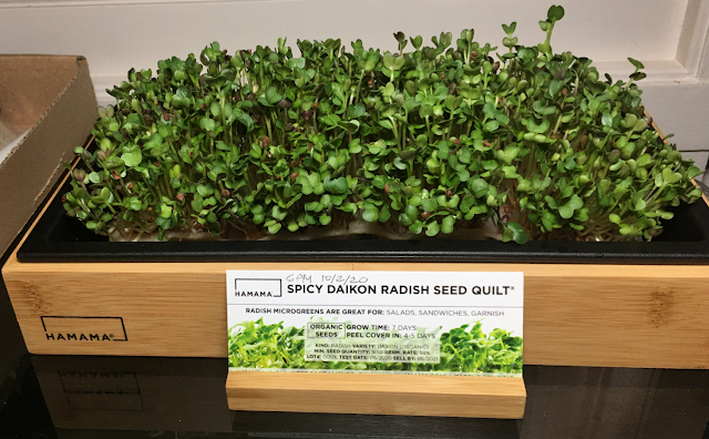 Photo of Hamama microgreens germinated seed quilt in tray with decorative bamboo grow tray frame and seed quilt label holder