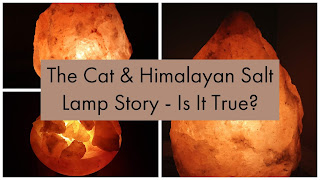 Did a cat really nearly die from a Himalayan salt lamp?