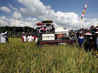 75 Hektar, Desa Langkang Panen Raya
