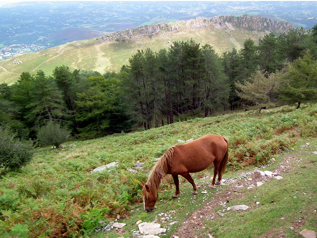A pottock (wild Basque pony) on the slopes of La Rhune. Pyrenees-Atlantiques, France. Photographed by Susan Walter. Tour the Loire Valley with a classic car and a private guide.