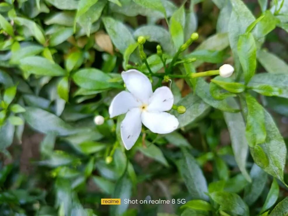 realme 8 5G Camera Sample - Flower, Normal