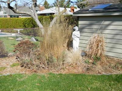 Etobicoke Toronto spring garden cleanup before by Paul Jung Gardening Services Inc