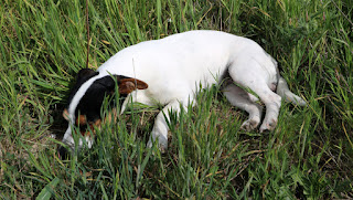 Louise sleeps in the long grass
