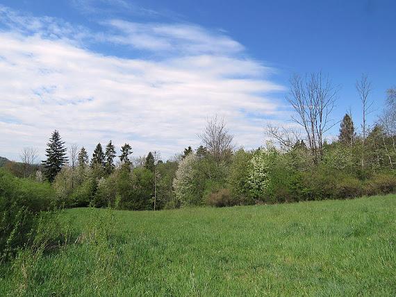 Wiosenne drzewa