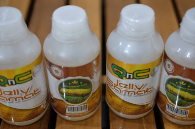 obat herbal untuk mengatasi sinusitis