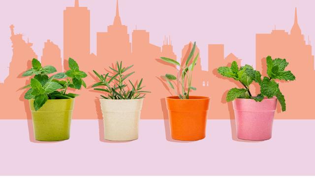 6 steps growing greens in rooftop