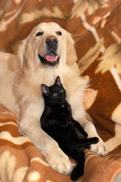 white dog with black cat