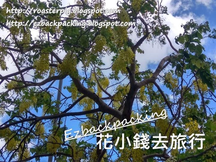 粉嶺康樂公園豬腸豆