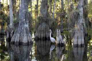 Things to Do while Exploring Maimi, Everglades National Park