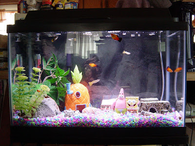 10 GALLON AQUARIUM ? SETUP IDEAS, DIMENSIONS, SIZE AND KIT TIPS