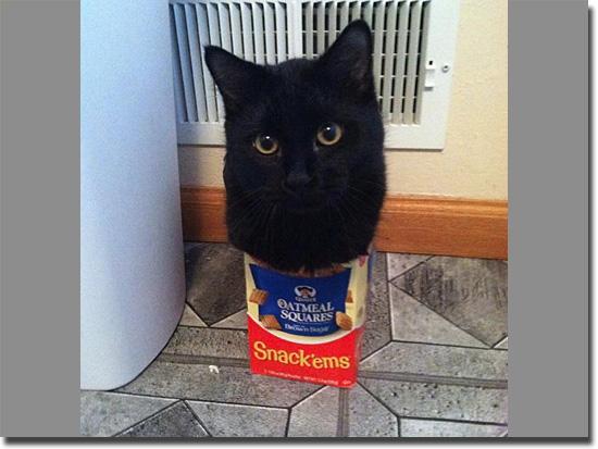 Imagens tão absurdas que parecem mentira - Gato encaixotado