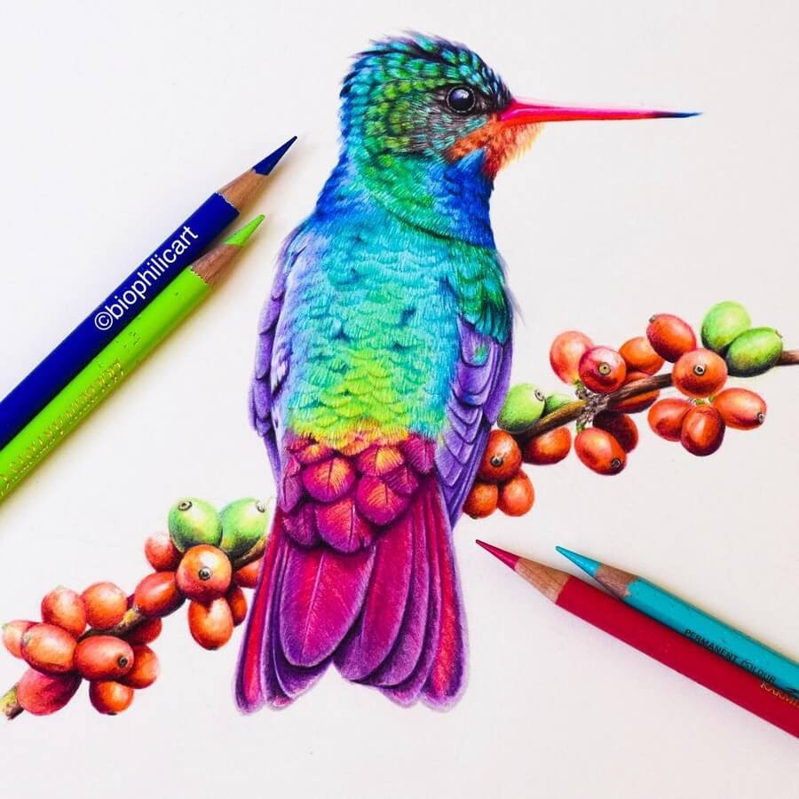 10-Hummingbird-Sallyann-www-designstack-co