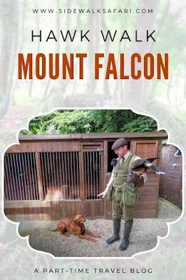 Take a Hawk Walk at Mount Falcon in County Mayo Ireland