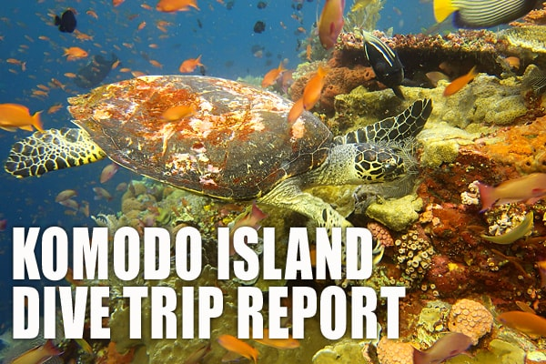 Dive Report for Komodo Island