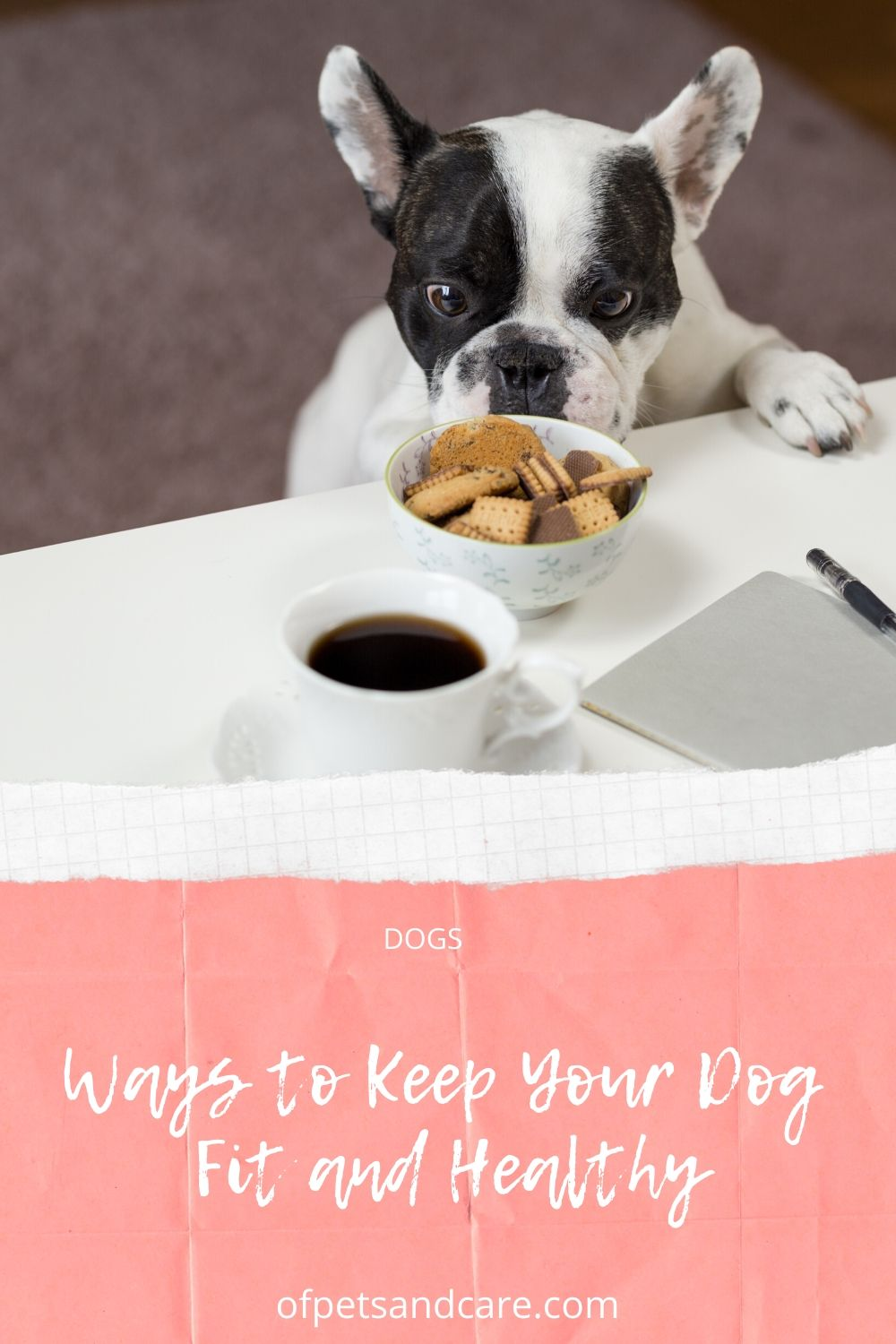 Ways to Keep Your Dog Fit and Healthy