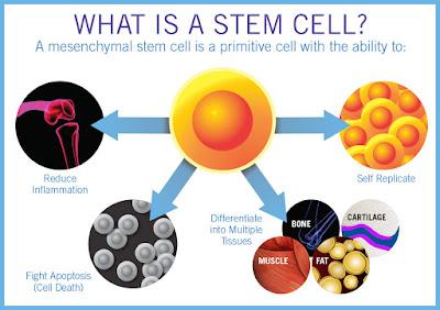 Terapi Stem Cell / Sel Punca