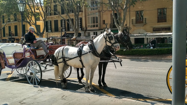 Palma de Mallorca wyspa co zobaczyć?