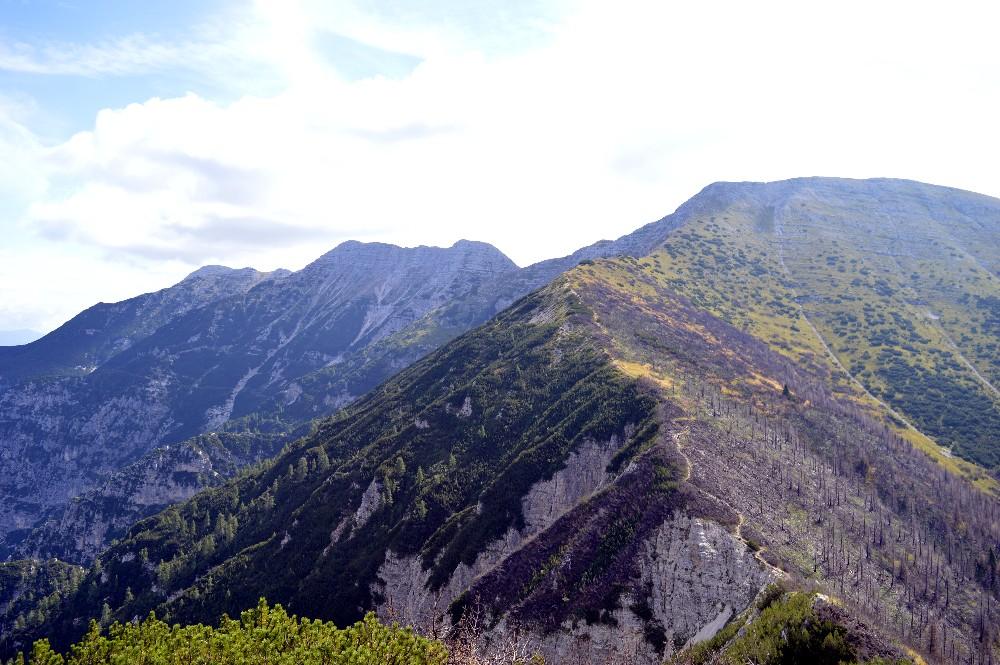 Escursione a cima larici e cima p rtule partendo da for Le pigne dei larici