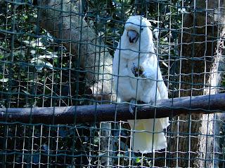 Parco Gallorose(ガッロロゼ公園)白いオウム