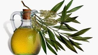 Khasiat Minyak Pohon Teh Terapi Untuk Keloid