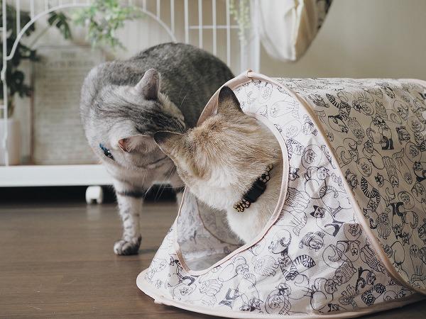 新しく買ったリサラーソンのテントのにおいをチェックする猫たち