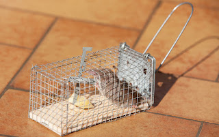 mouse trap video funny