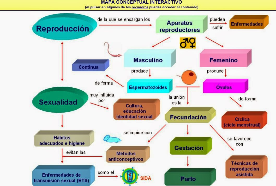 biologia2bachcamp: 3º ESO. TEMA 9. APARATO REPRODUCTOR