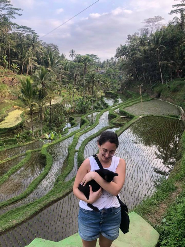 bali tegalang rice fields