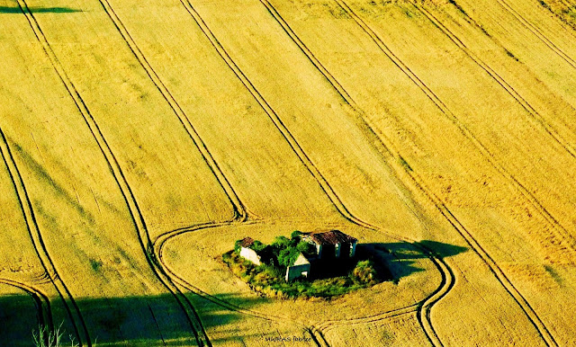 ferme dans les champs de colza