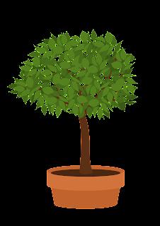 Bonsai Elm Tutorial