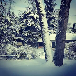 Graham Sedam, blog, thoughts, life, interests, winter, winter scene, trees, snow, house, bushes, new year, resolutions, New Year's, goals, motivation, focus, driver, tracking, trackability, entertainment