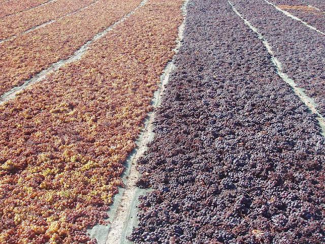 производство_вина_винсанто