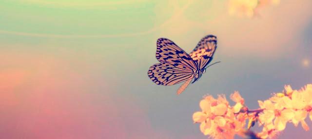 9 خصائص للناس شديدي الحساسية
