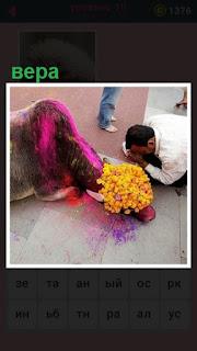 на земле лежит святая корова и мужчина на коленях молится