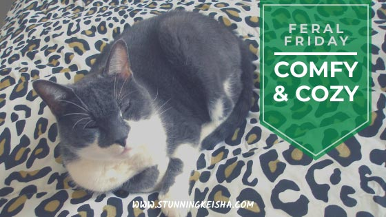 Feral Friday: Comfy & Cozy