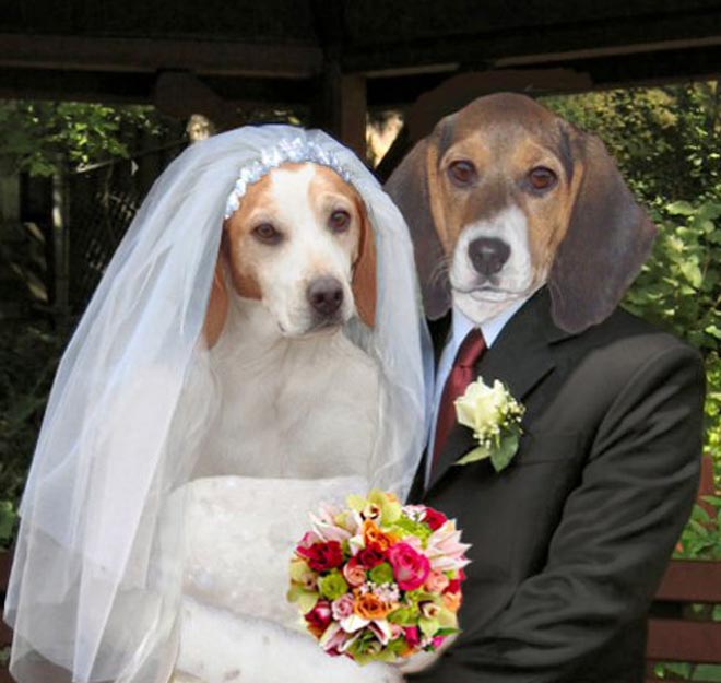funny animal wedding pictures wwwpixsharkcom images