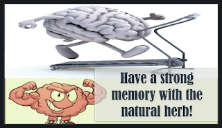 Have a strong memory with the natural herb!