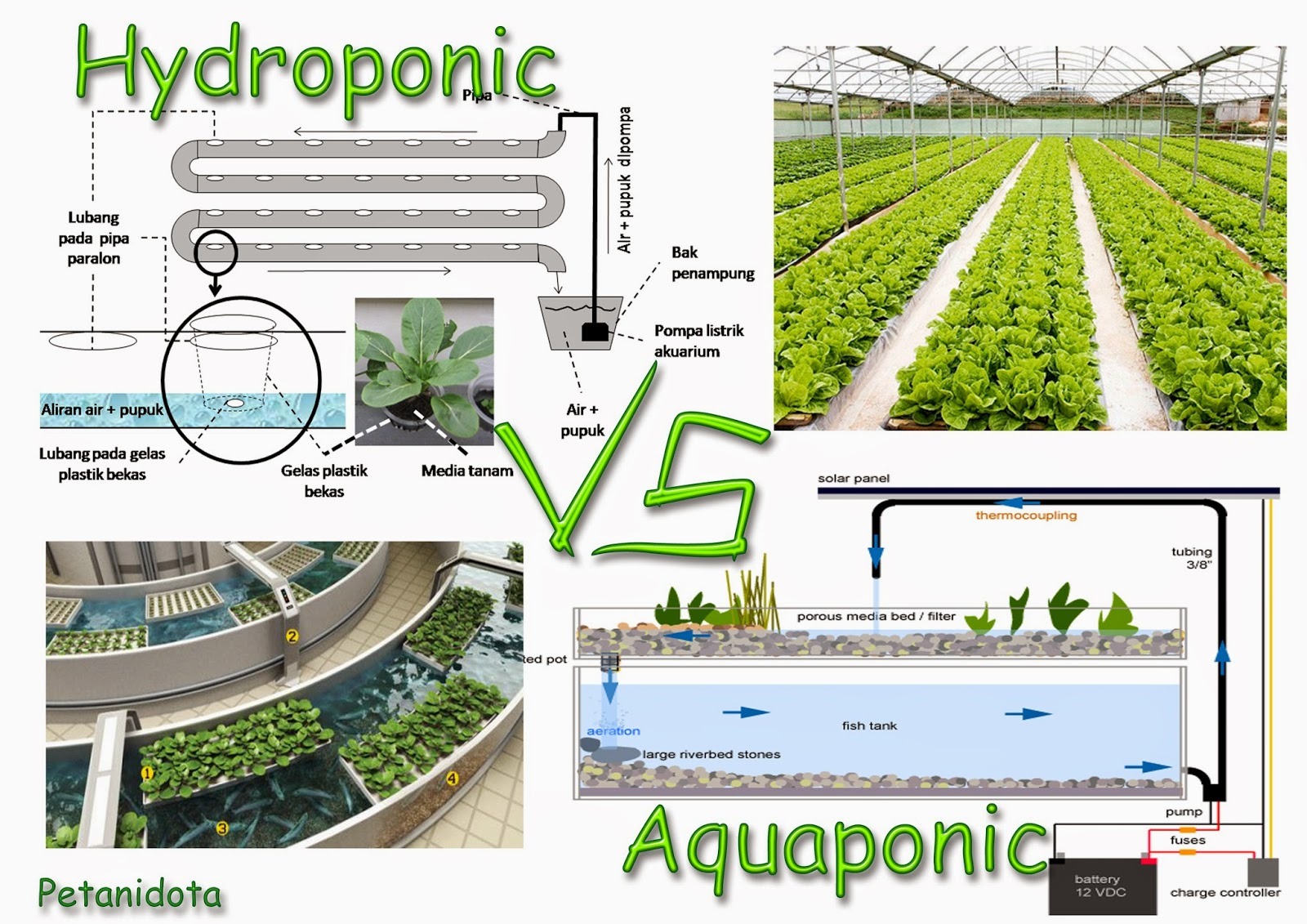 hydroponic vs aquaponic which is the best one petani top