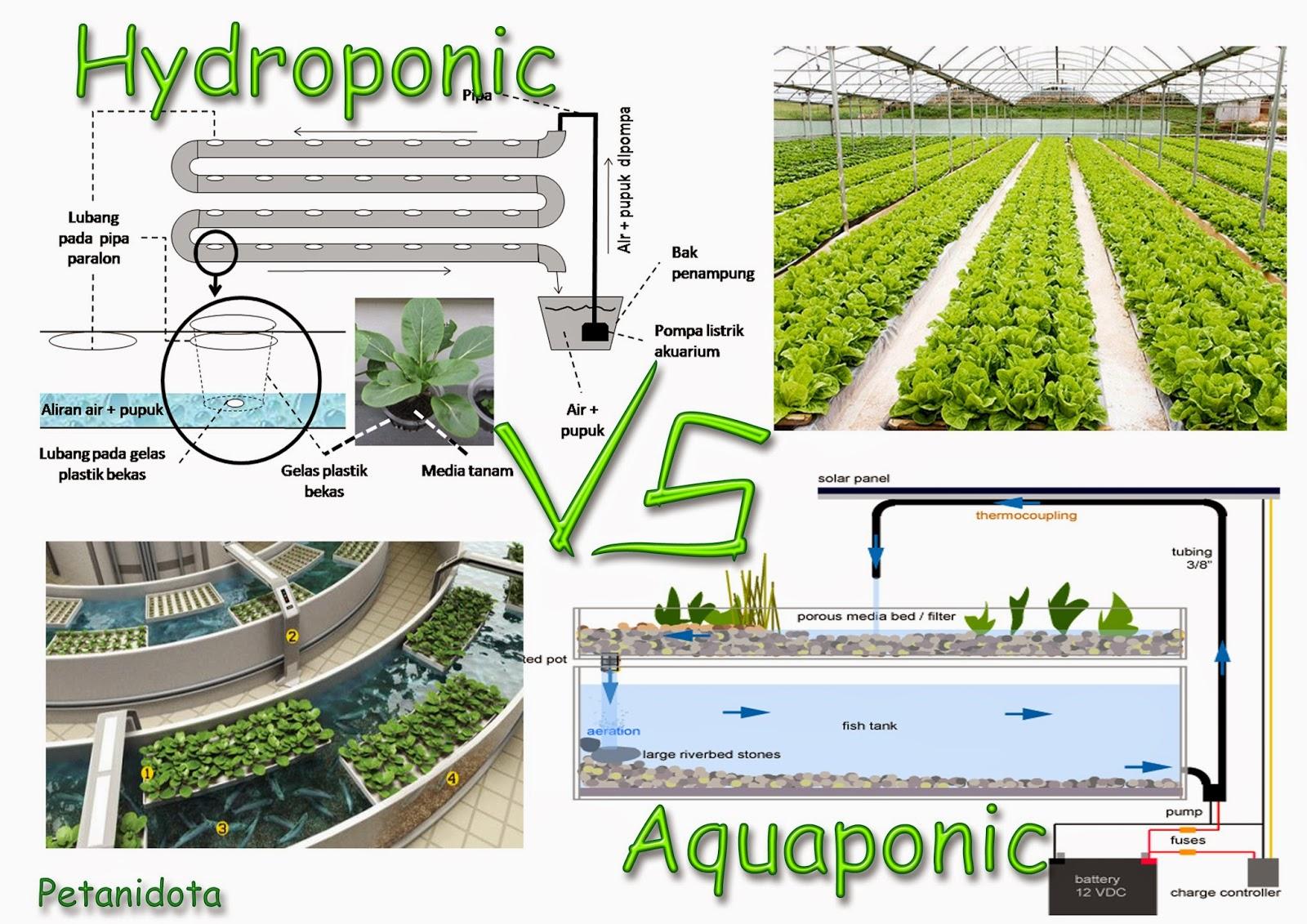Hydroponic Vs Aquaponic