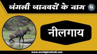 Nilgai Animal Name In Hindi | Wild Animals Name In Hindi
