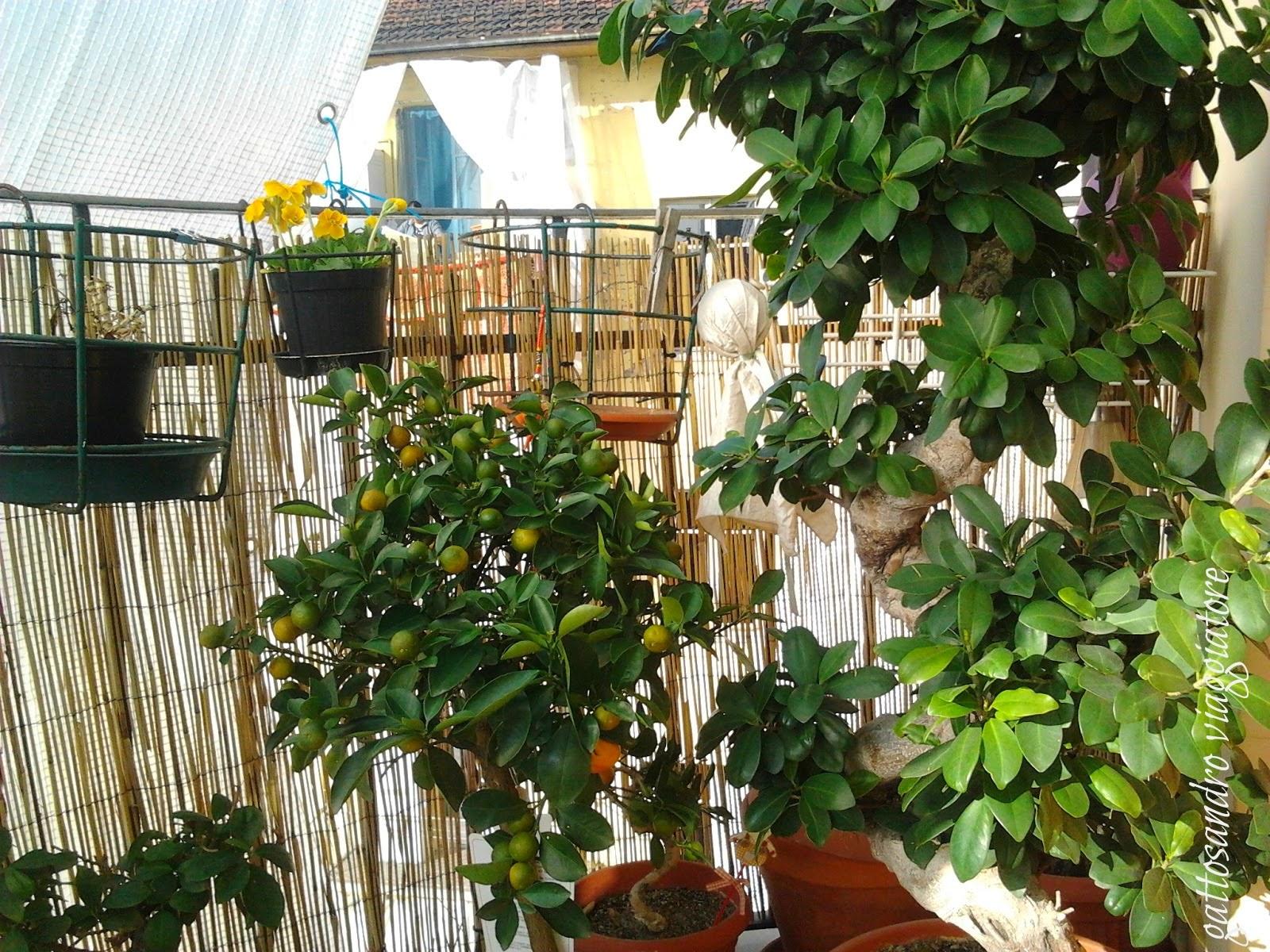 Ortensie Sul Balcone : Gattosandro viaggiatore travel la primavera sul